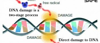 non-ionizing-radiation-cell-phone-ros-dna-damage-two-stage