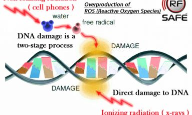 Scientists End 13 Year Debate Proving Non-ionizing RF Microwave Effect Causes Cell Phone Radiation DNA Damage