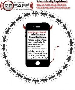 Why-Do-Ants-Keep-Safe-Circular-Distance-From-iPhone-Ants-Circling-iPhone-Video