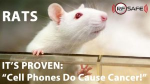 cellphones-cause-cancer-in-rats