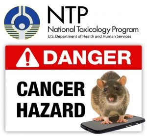 ntp-finds-cancer-link-from-cell-phone-radiation-in-rats