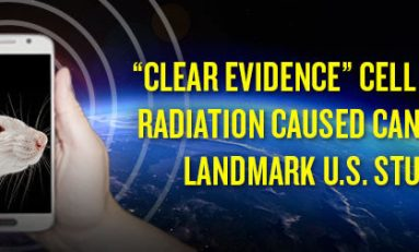 """Clear Evidence"" Of Cancer From Cell Phone Level Radiation Exposure - RF Safe Issues Holiday Shopping Warning"