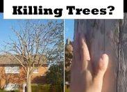 Is 5G Radiation Killing Trees?