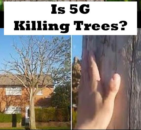 killing-Trees-5g